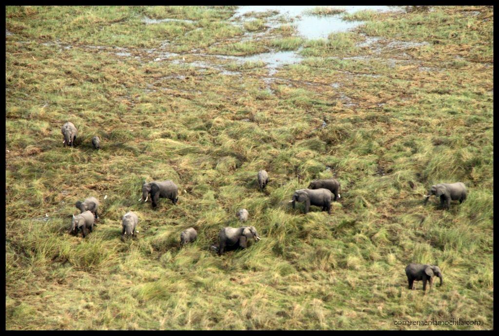 Elefantes Delta Okavango