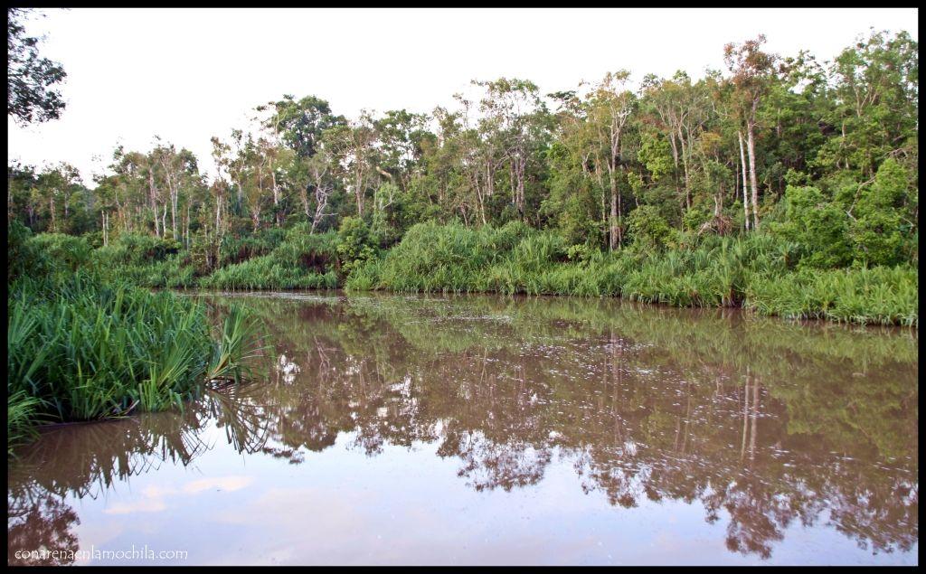 Tanjung Puting