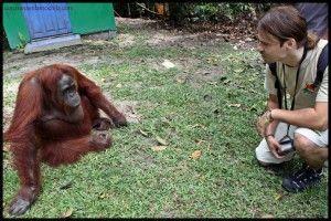 Camp Leakey Borneo