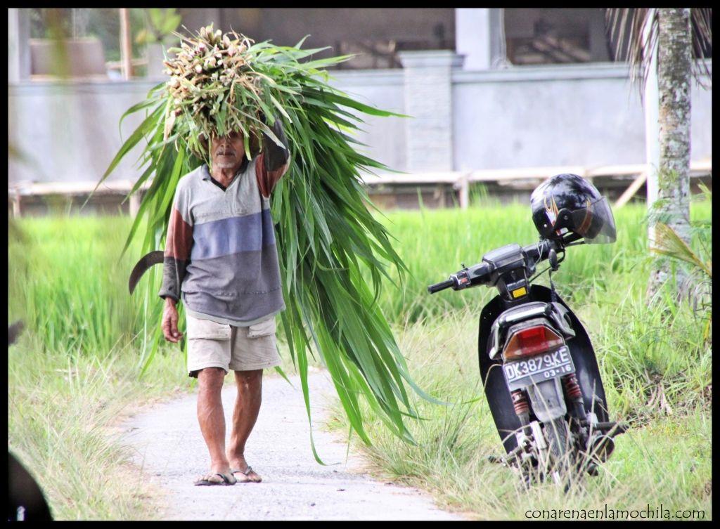 Arrozales Ubud Bali