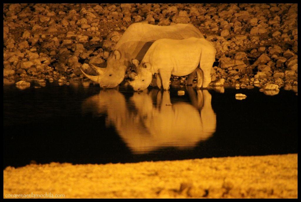 Rinoceronte Etosha Namibia