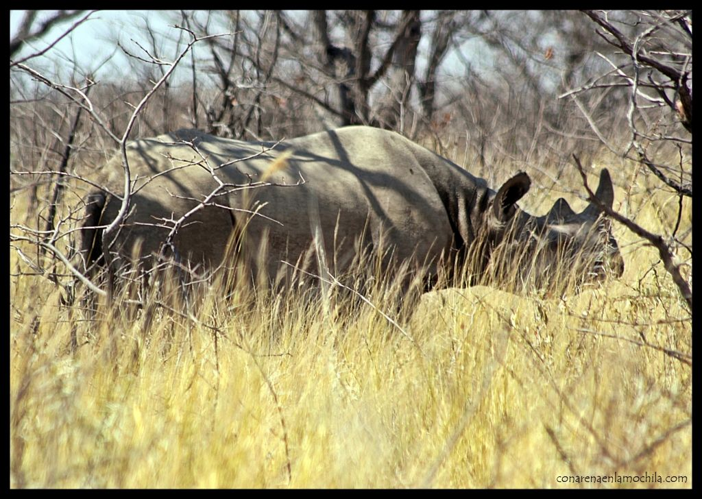 Rinoceronte Etosha