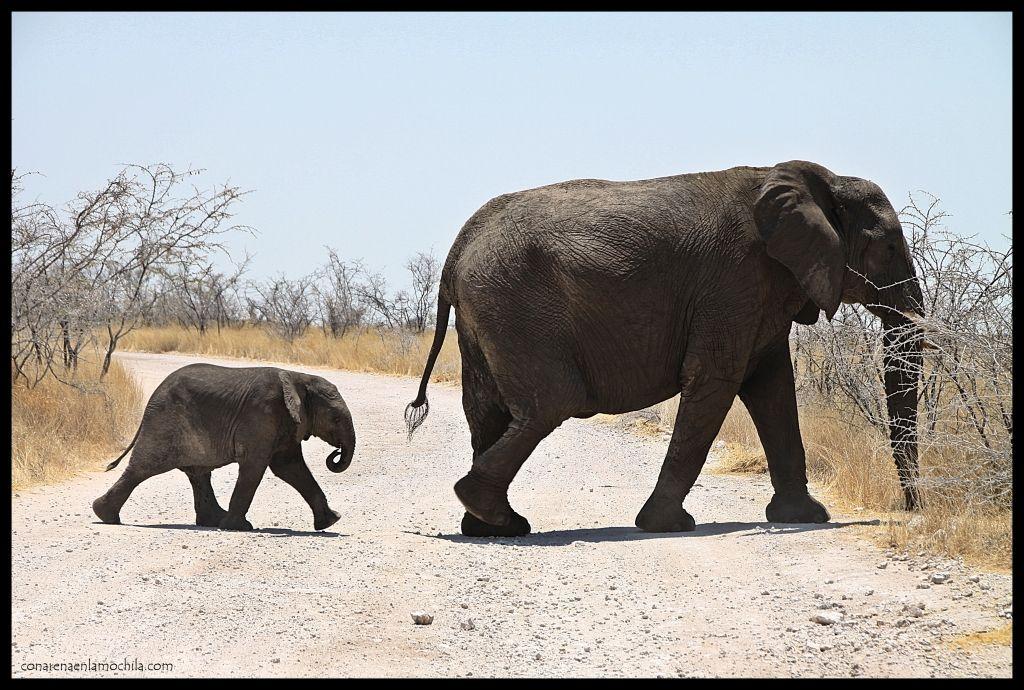 Elefante y cría