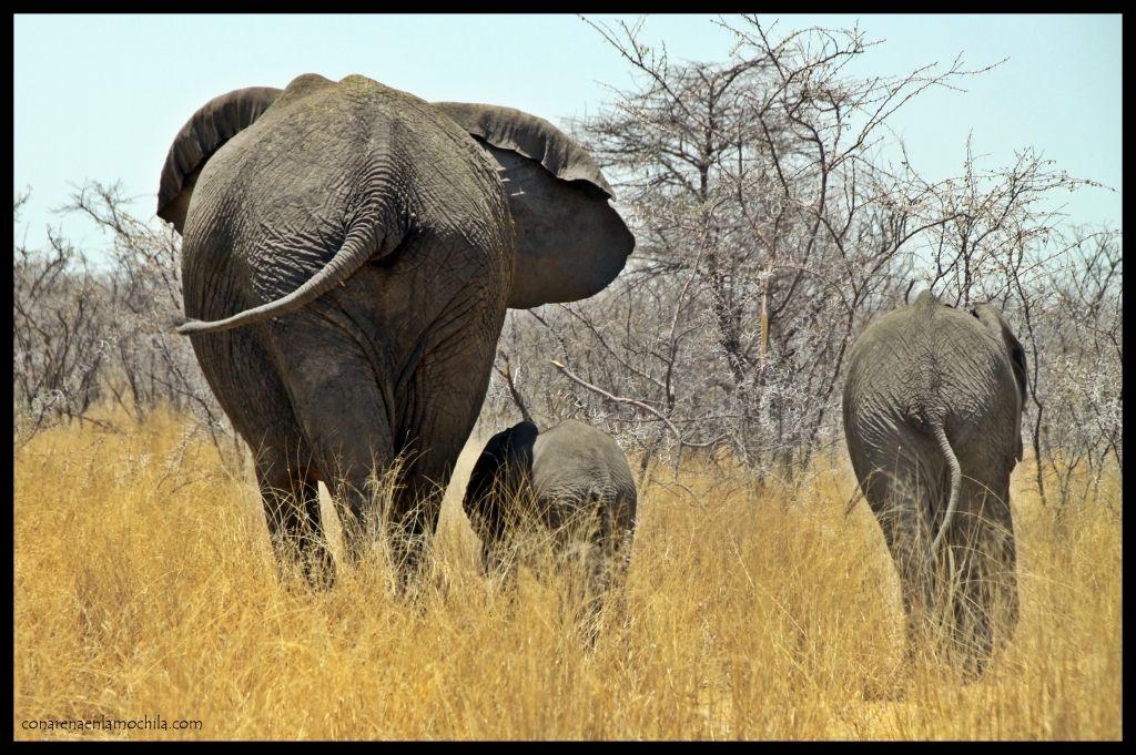 Elefantes familia