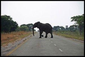 Elefante Caprivi