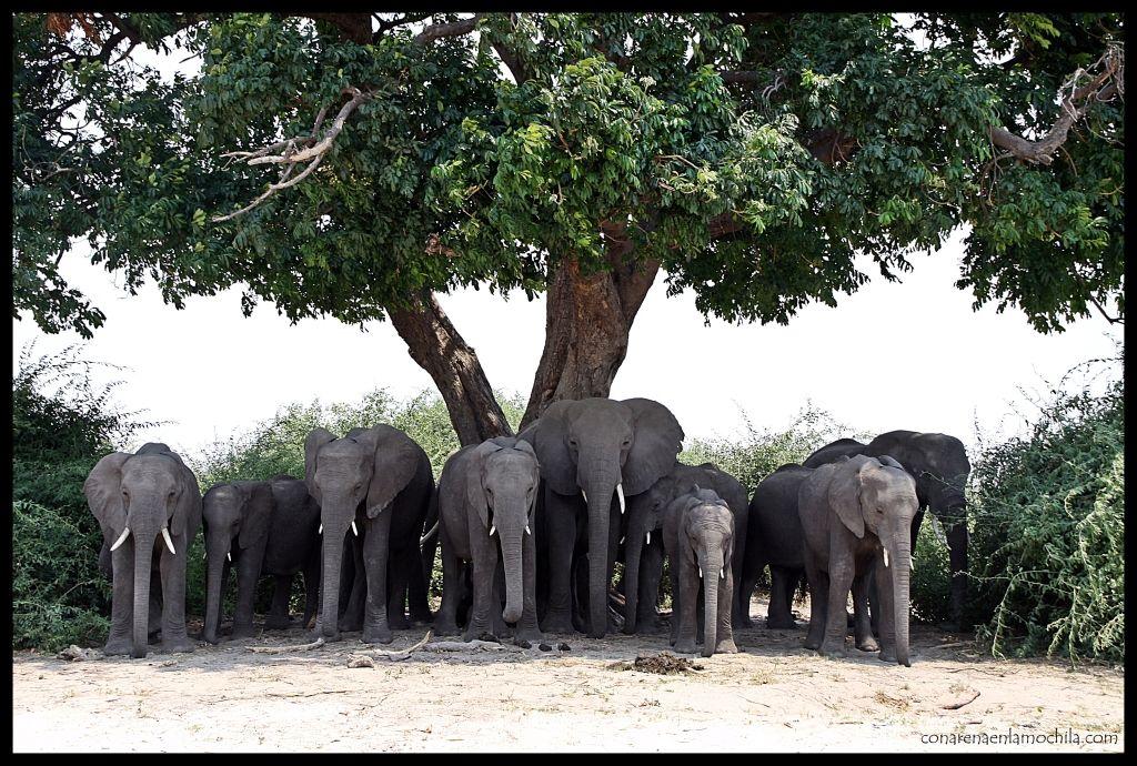 Elefantes Chobe Riverfront