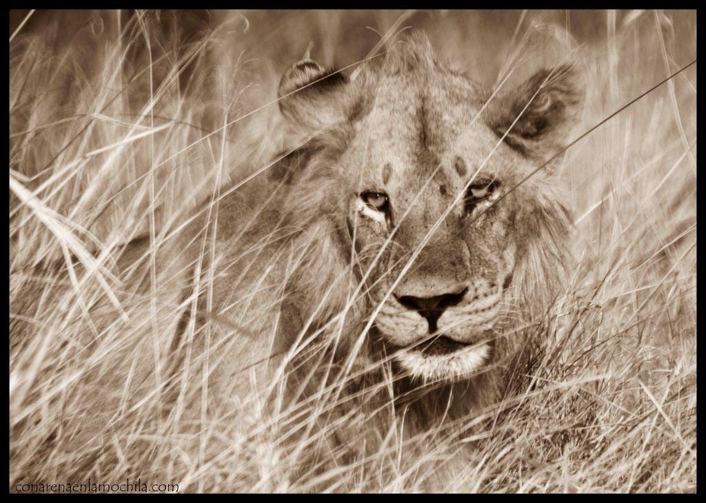 León Moremi Botswana