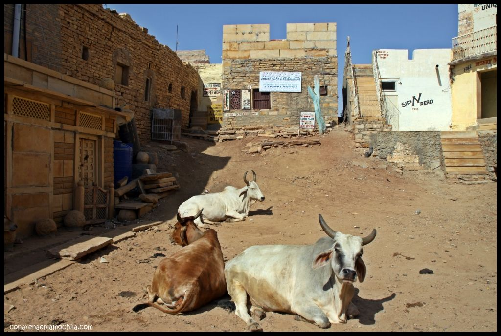 Kuku's coffee shop Jaisalmer India