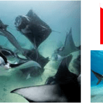 Nuestros 10 paraísos soñados del buceo