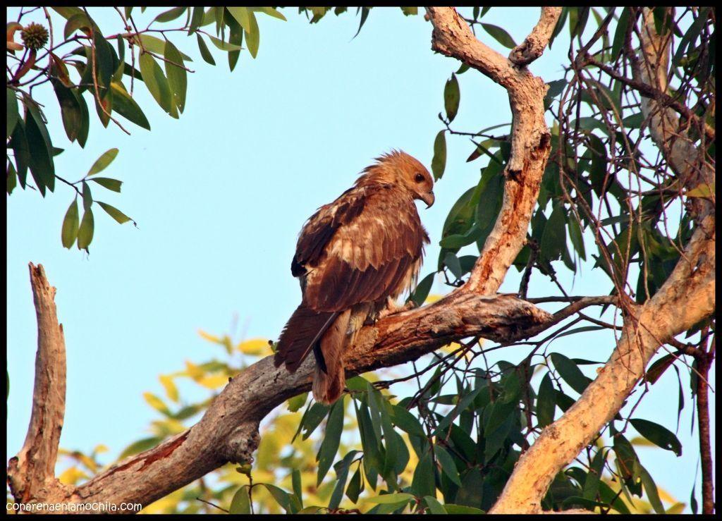 Yellow Waters Kakadu - Australia