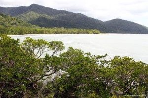 Daintree National Park Australia
