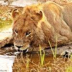 Sur de África: Savuti, Moremi y Delta del Okavango