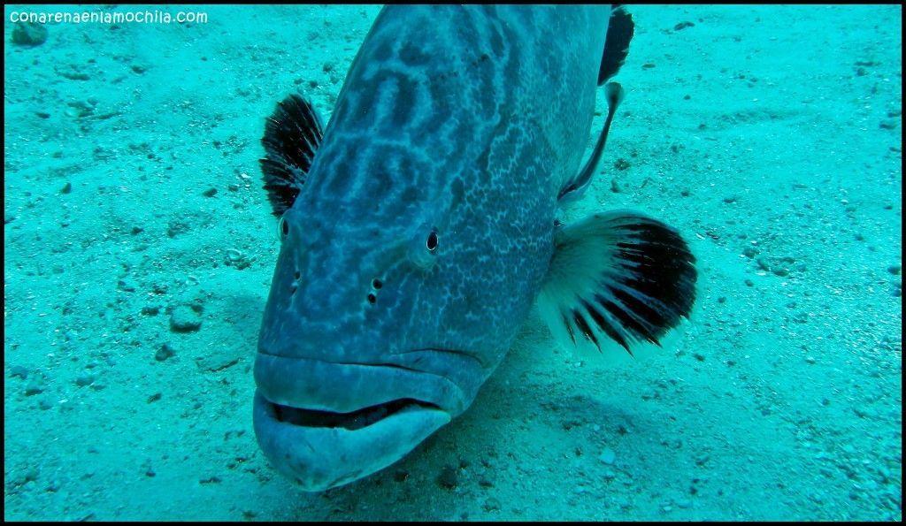 Shark Wall New Providence Bahamas
