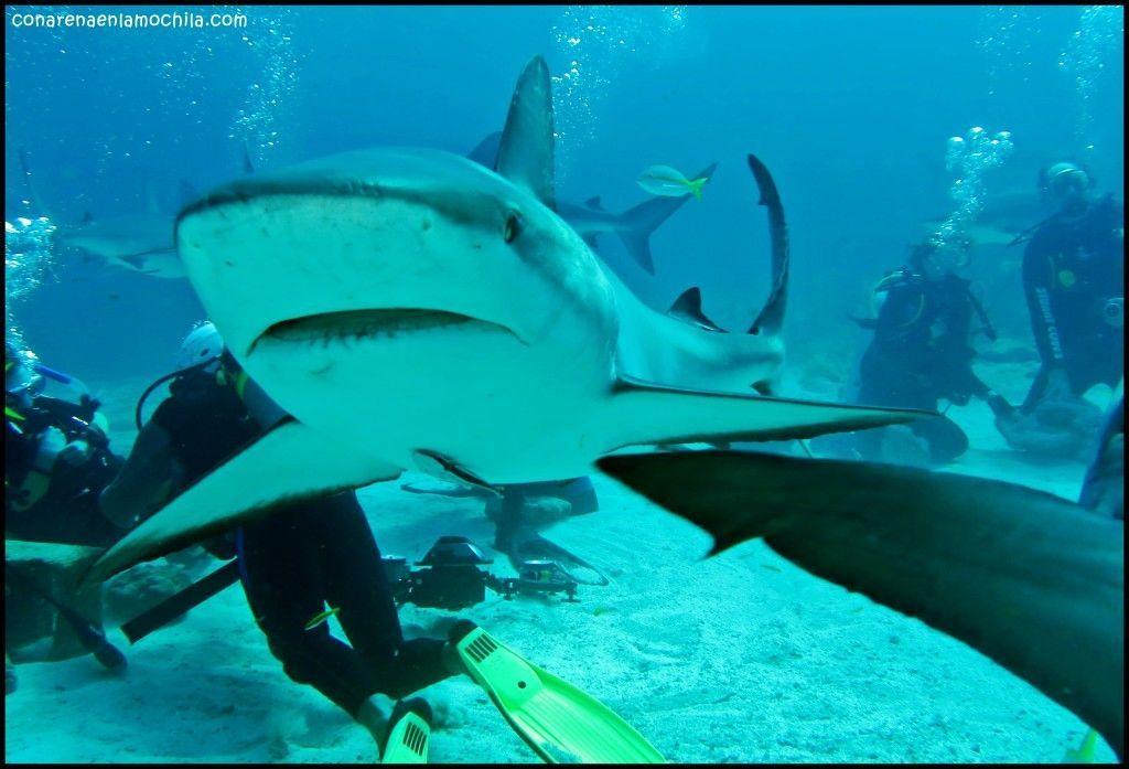 Shark Arena New Providence Bahamas
