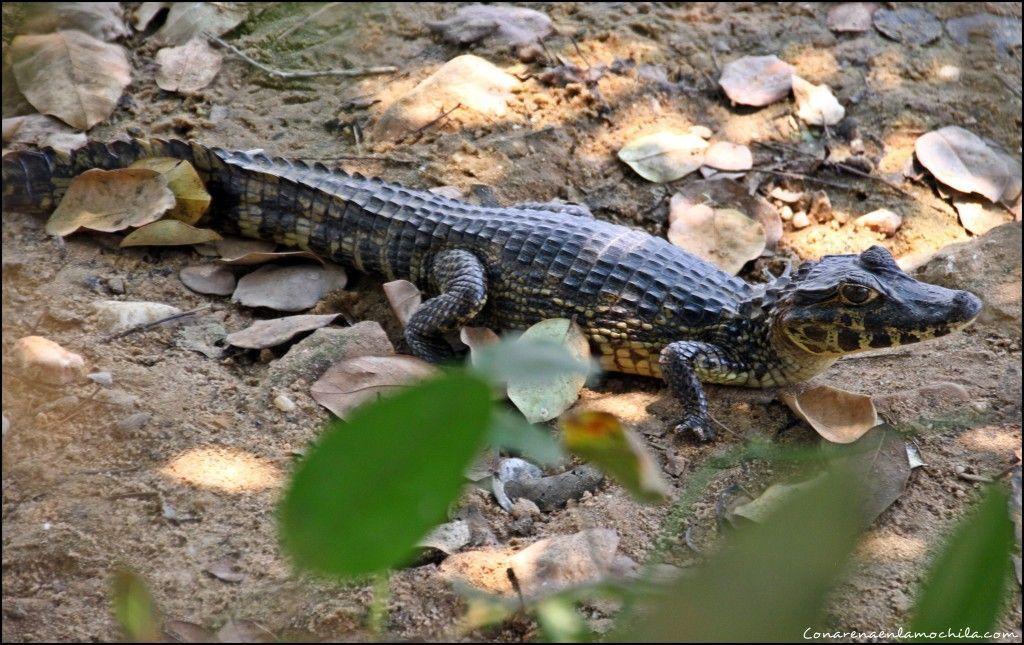 Transpantaneira Pantanal Mato Grosso Brasil