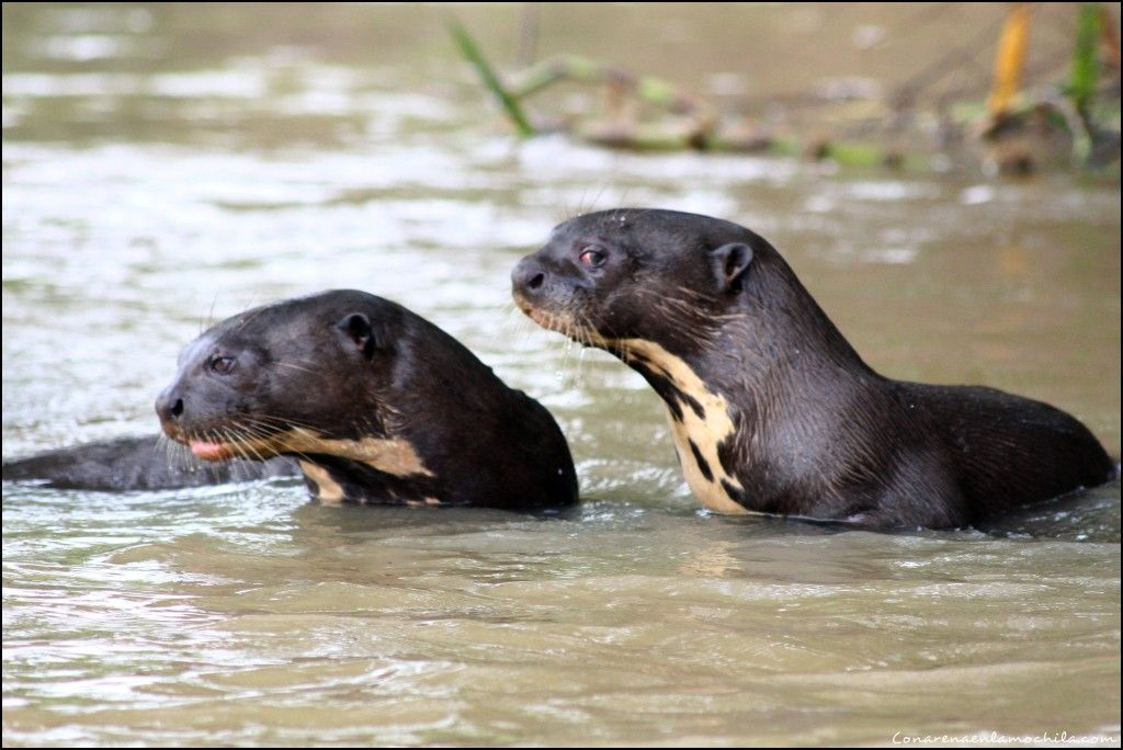 Porto Jofre Pantanal Mato Grosso Brasil