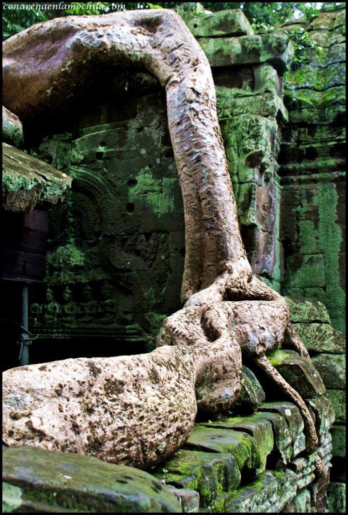 Ta Prom Angkor Siem Reap Camboya