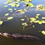 Everglades National Park: entre alligators, cocodrilos y humedales