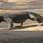 Indonesia: Komodo, islas Gili y Yakarta