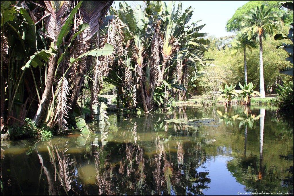 Jardín Botánico Rio de Janeiro Brasil