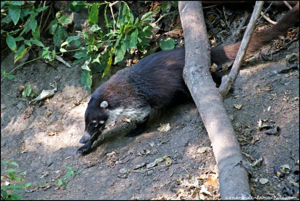 Reserva Atitlán Guatemala