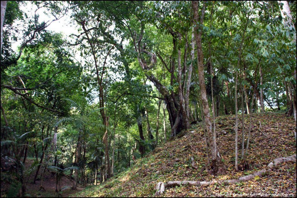 Yaxhá Guatemala