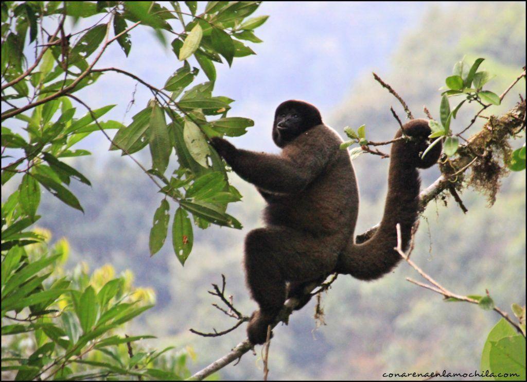 Parque Nacional Manu Amazonia Perú