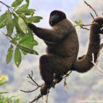 Parque Nacional del Manu: Qué ver y cómo llegar a la joya de la Amazonia peruana