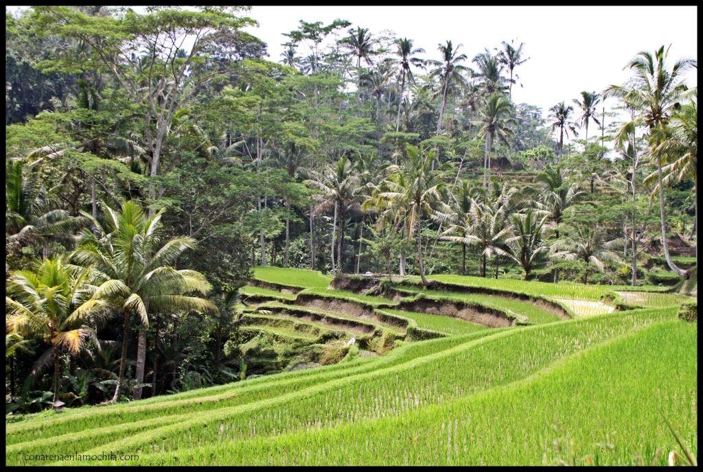 Gunung Kawi Bali Indonesia