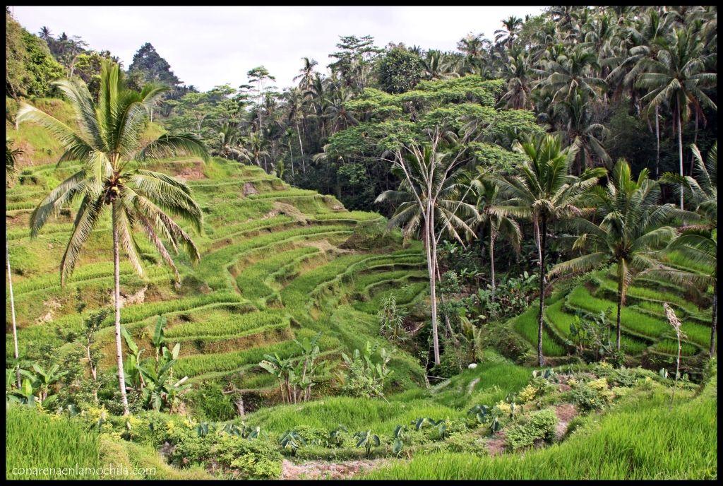 Tegalalang Bali