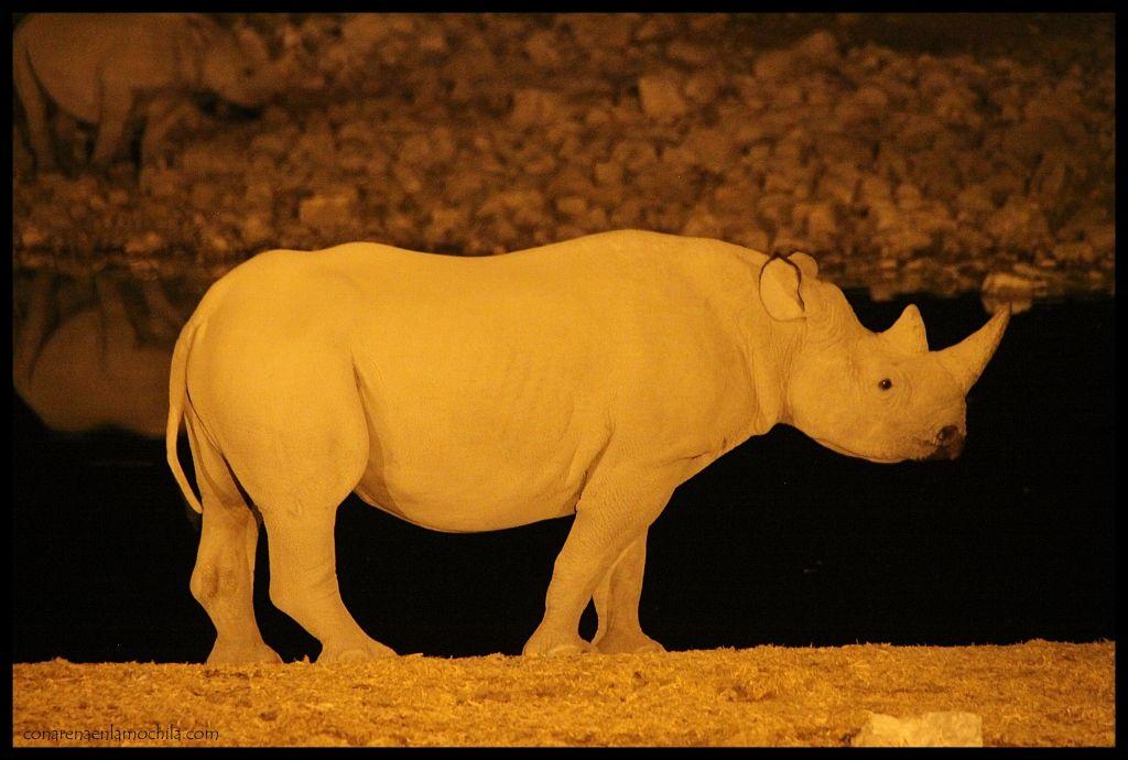 Rinoceronte Okakuejo