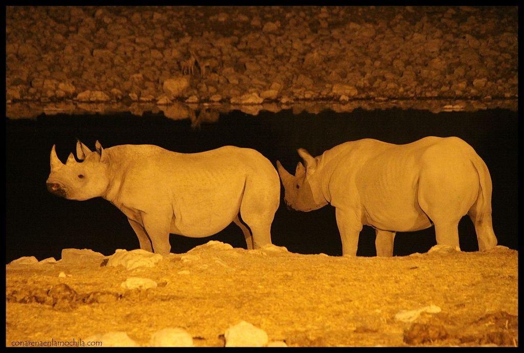 Rinocerontes Okakuejo 2