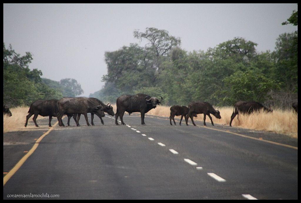 Carretera Chobe