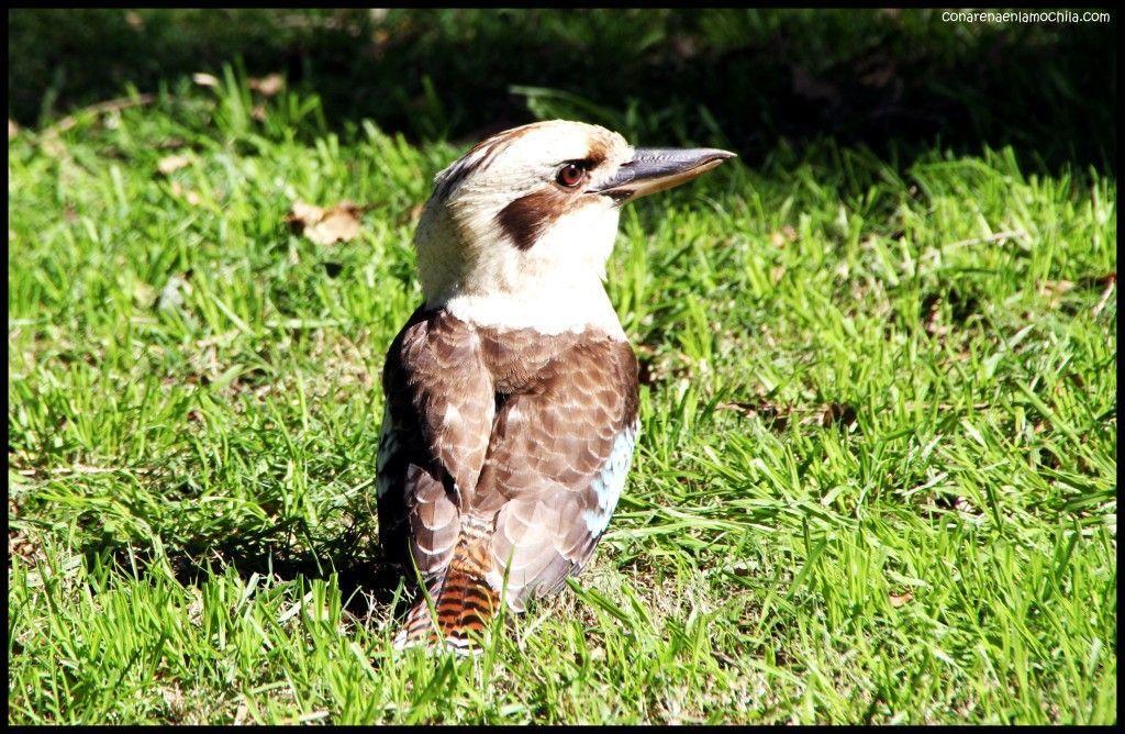 Royal Botanic Gardens Sidney Australia