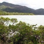 Australia: Parque Nacional de Daintree y Bloomfield Track
