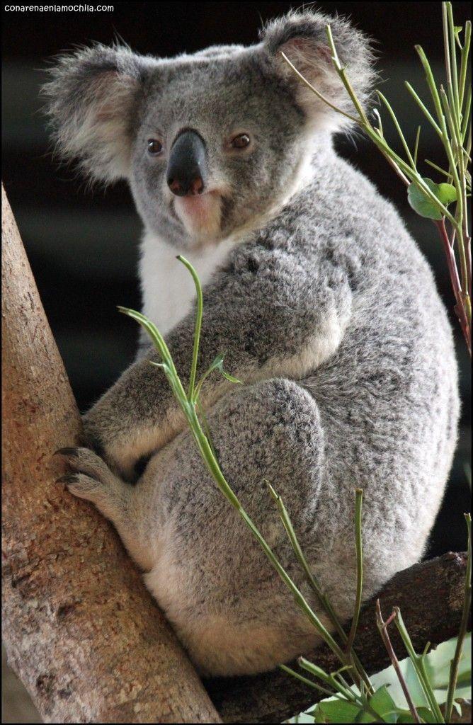 Australia Zoo Beerwah Australia