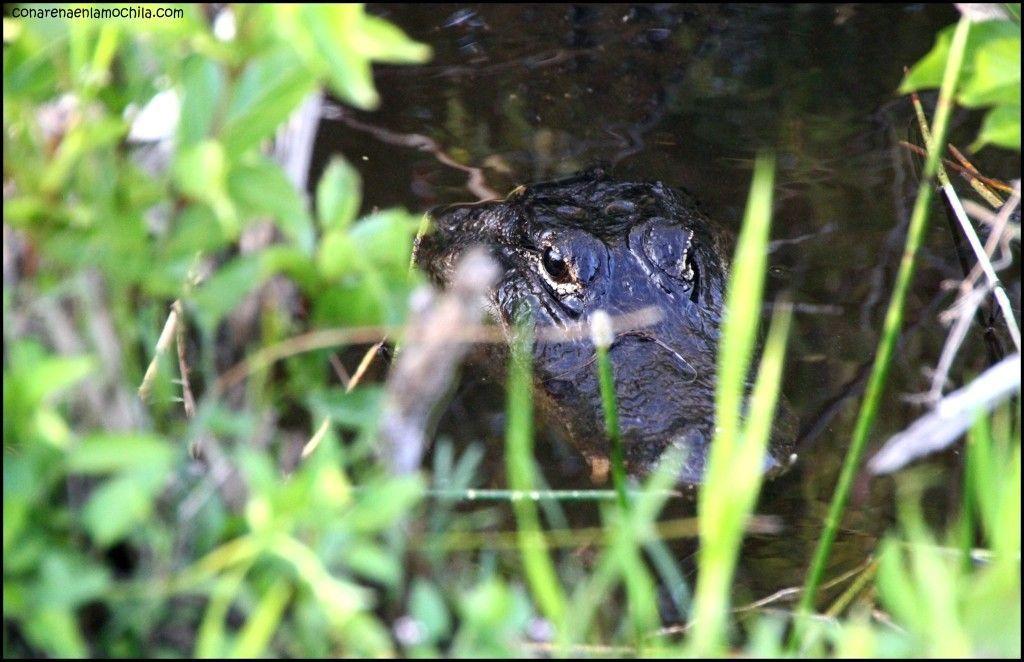 Anhinga Trail Everglades National Park Flori