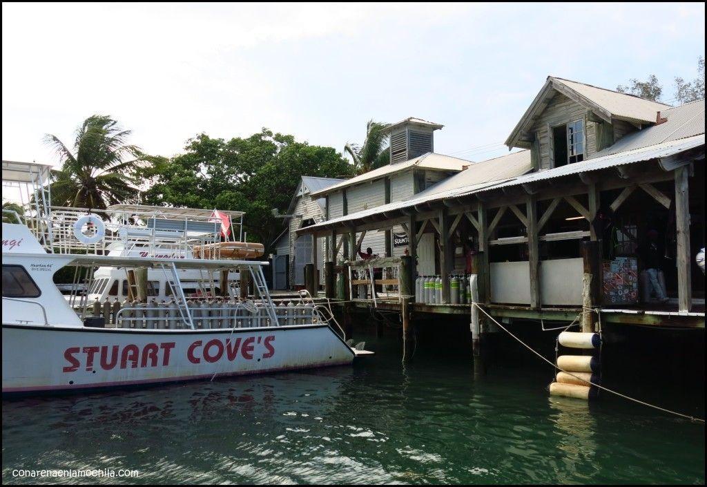 Stuart Cove's New Providence Bahamas
