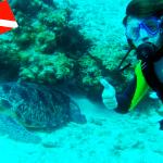 Zanzíbar 2008: Mnemba Atoll Marine Reserve