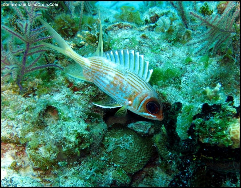 Hydrolab Grand Bahama Bahamas