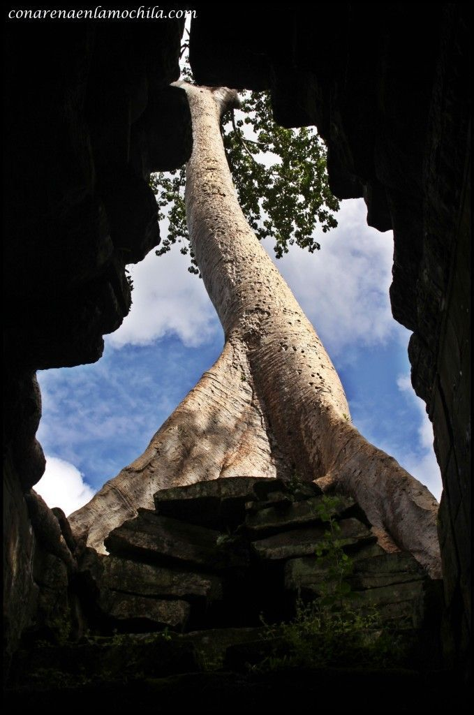 Preah Khan Angkor Siem Reap Camboya