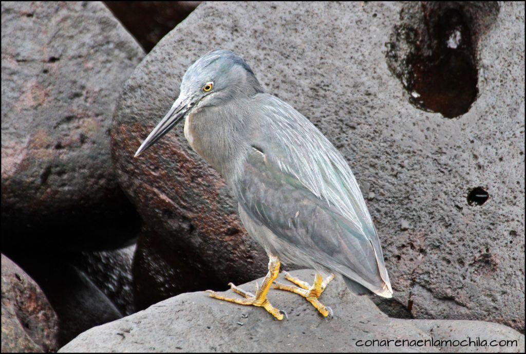 La Española Galápagos Ecuador