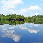 El Amazonas de Brasil: Viviendo una aventura en el Parque Nacional de Jaú