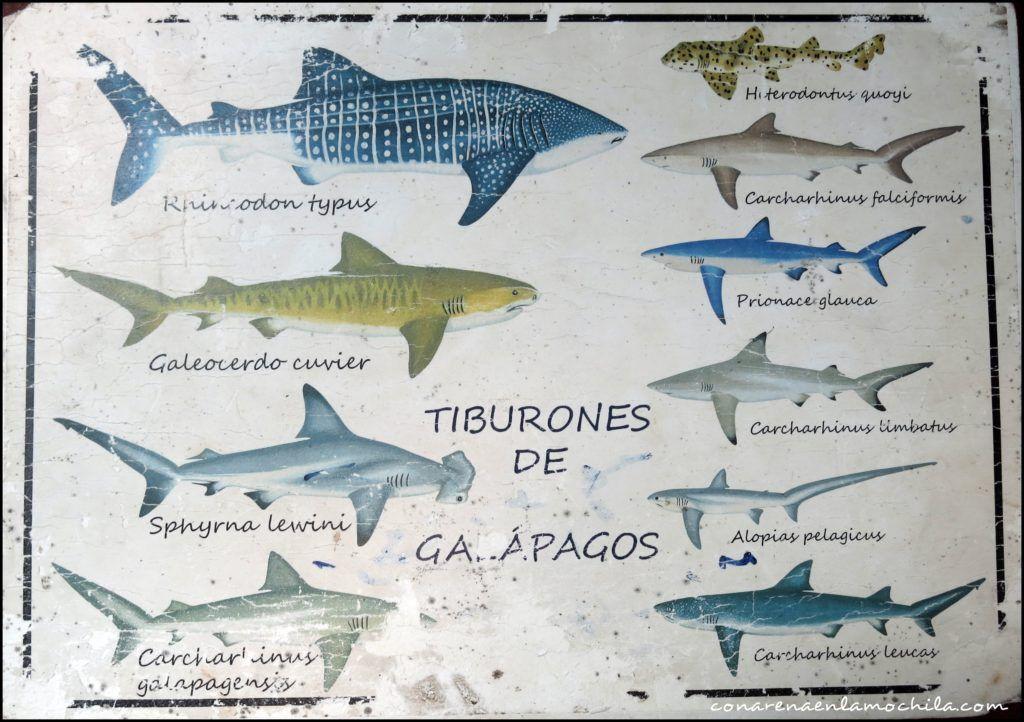 Buceo Galápagos Ecuador