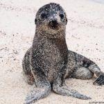 Galápagos: Contemplando la vida en la isla de San Cristóbal